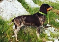 small_lucerne_hound_small.jpg