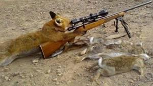 fox_shooter