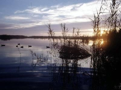 duck_hunting_2009