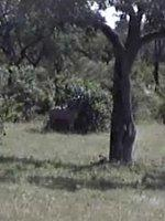 Live_African_wildlife_safari_cam